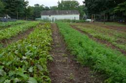 Stony Point vegetable gardens